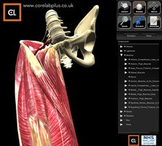 Gluteal Muscles, Thigh Muscles, Virtual Reality Applications, Augmented Reality, Glasgow, Glutes