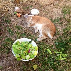 Seriously never give your bunny lettuce it ha no nutritional value and will give bunny the runs. give your bunny greens instead! Cute Baby Bunnies, Funny Bunnies, Cute Baby Animals, Animals And Pets, Bunny Care, Fluffy Bunny, House Rabbit, Honey Bunny, Bunny Rabbit