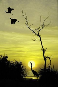 Silhouette Art Painting Animals Beautiful 18 New Ideas Beautiful Sunset, Beautiful Birds, Beautiful World, Animals Beautiful, Nature Pictures, Beautiful Pictures, Tier Fotos, Amazing Nature, Belle Photo