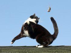 離れて宙返り:スナップは小さなげっ歯類は周りにマウスのような猫と町に直面する危険を示している