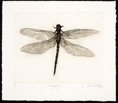 Sarah Gillespie - Artist Dry point of a dragonfly