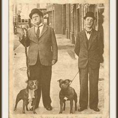 Uplifting So You Want A American Pit Bull Terrier Ideas. Fabulous So You Want A American Pit Bull Terrier Ideas. Pitbull Terrier, Dog Photos, Dog Pictures, Yorky Terrier, Laurel Et Hardy, Stan Laurel Oliver Hardy, Pitbulls, Nanny Dog, Vintage Dog