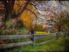 29 Best Flowers And Split Rail Fences Images Split Rail Fence Rail Fence Garden