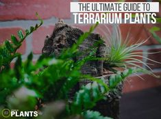 Understanding Terrarium Plants Closed Terrarium Plants, Build A Terrarium, Terrarium Ideas, Tropical Terrariums, Tropical Plants, Types Of Ferns, Kalanchoe Blossfeldiana, Lipstick Plant, Crassula Ovata