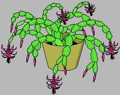 Crop: Holiday cactus