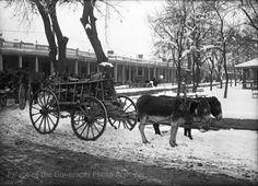 pogphotoarchives:  Burros pulling wagon loaded with firewood http://ift.tt/1JWGUVZ