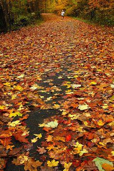 An Autumn Path.