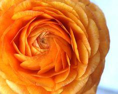Digital download Macro photography Whimsical flower peony photo Orange tangerine