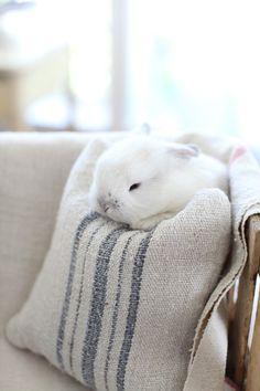 I want a bunny rabbit