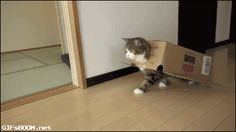awesome Why Do Cats Love Boxes? 12 Facts About Cat In The Box You Probably Didn't Know