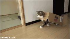 El Mejor Disfraz – Muy Original { GIF } #gatos #graciosos