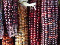 How and Why to Nixtamalize Corn — Farm & Forage Kitchen Corn Mash, How To Make Cornbread, Fresh Tortillas, Grain Free Bread, American Diet, Creamed Corn, Food System, Spicy Chili