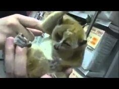 Luzak :] lemurek <3