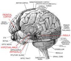 rocks true grit and the o 39 jays on pinterest : the brain diagram psychology - findchart.co