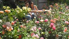 Fine settimana dedicato a piante, fiori, ortaggi, sementi, attrezzature per il giardinaggio, arredi da giardino, e per imparare a coltivare il verde