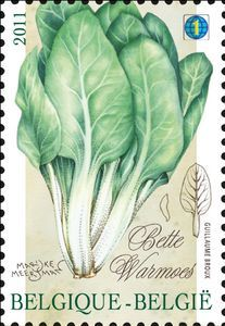 Vegetables of the past: Bette - Warmoes