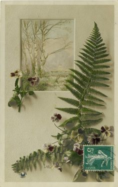Pansies and Fern Frond~