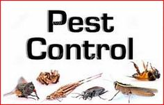 Call @ 9999787571.Choose the best pest control in Delhi/NCR and protect your home and offices from the attack of pests with magical effects of Mourier pest control. You can have services in Delhi, Ghaziabad, Gurgaon, and many other places near to Delhi/NCR.