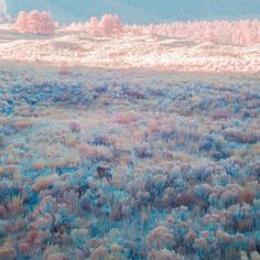 Eric Portis colour palette: pink, blue, brown  muted pastels