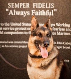 An Ode To Military Working Dogs