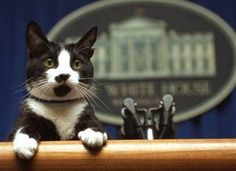 Socks Clinton addresses the press at the White House podium during healthier days