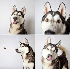 Photo booth for dogs.