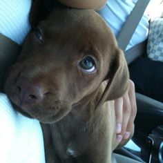 Claire as a puppy. She made my ♥ melt!