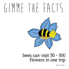GIMME THE FACTS - Bee Facts. Bees are so important! That\'s why Buzz Greetings gives $1 to SAVE THE BEES Australia for every purchase made on their Etsy store. buzzgreetings.ets... OR follow bee @Buzz Greetings on Instagram. For more about SAVE THE BEES Australia go to beethecure.com.au Bees can visit 50-100 flowers in one trip