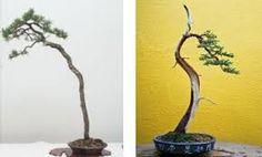 Resultado de imagen para bonsai arte y naturaleza