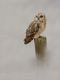 owl fog. | by Siegfried Noel on 500px