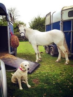 A happy horse and happy dog on their day out to an event. Both fed on seahorse atlantic Sea Weed Recipes, Marine Environment, Days Out, Happy Dogs, Seaweed, Dog Cat, Horses, Pets, Natural