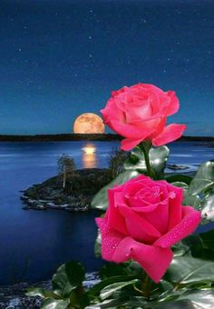 I Love Pictures,Enjoy My Beautiful World. Rose Images, Flower Images, Flower Pictures, Flower Art, Beautiful Flowers Garden, Beautiful Roses, Pretty Flowers, Beautiful Moon, Beautiful Images