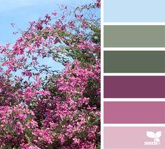{ autumn blooms } image via: @designseeds