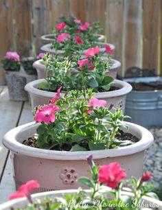 Flower gardening in the suburbs