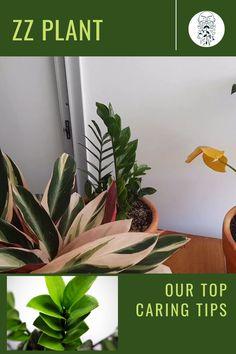 Zz Plant Care, House Plant Care, Winter Survival, Replant, Small Space Gardening, Plant Decor, Houseplants, Succulents, Gems