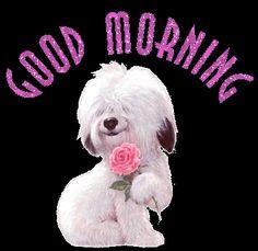 Good Morning Dog   ♥~♥~♥