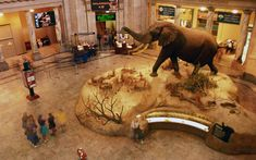 3. National Museum of Natural History in Washington, D.C.
