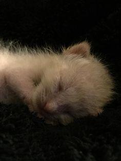 Oliver Twist Culbertson.  Born June 16, 2015