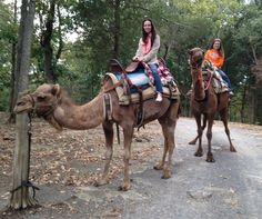 52 Things 52 Weeks: Camel Safari