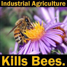 http://lightmsgs.wordpress.com/tag/extinction-of-honey-bees-and-the-effects-on-humans/