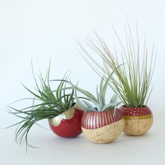 Holiday Air Plant Planter Trio with Air Plants - Red, Chartreuse & Gold