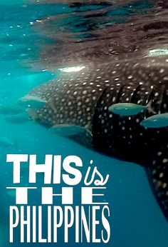 Wanderlust Duo hops down to the Philippines for some fun! Private boat hirefor island hopping, swimming with Cebu whale sharks, and a fiesta in Lapu-Lapu!