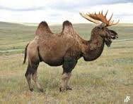 Bactrian Moose By Dwarf4r Deviantart Animal Mashups Photo Me Unusual Things