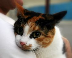 Wendy Humphry's's 10-month-old cat started jumping on her breast continuously for weeks to no avail, which prompted Humphry to go to the doctor. It turns out that she had a malignant tumor that would have metastasized if not treated.