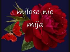 Good Morning Beautiful Flowers, Good Morning Images Flowers, Youtube, Pictures, Songs, Amor, Photos, Song Books, Youtubers