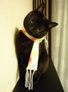 Cute round-eyed black cat. #Cute #Cats