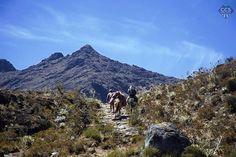 Te presentamos la selección especial: <<VENEZUELA: #Merida>> en Caracas Entre Calles. Los caminos del páramo siempre te llevan a un lugar mágico este iba al alto dd Santo Cristo a más de 4.000mts de altura. ============================  F O T Ó G R A F O  >> @gusfoto << Visita su galería ============================ SELECCIÓN @mahenriquezm TAG #CCS_EntreCalles ================ Team: @ginamoca @luisrhostos @mahenriquezm @teresitacc @floriannabd ================ #Caracas #Venezuela…