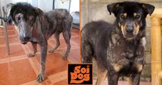 I MAY NEVER BE ADOPTED – PLEASE BECOME A SPONSOR FOR ME I am Candra, a 7 year old boy who lives in the Old Dog run at Soi Dog Foundation. I arrived here 2½ years old suffering from horrendous skin problems. Life on the streets had not been kind. Will you please show you care by becoming my SPONSOR? https://www.soidog.org/en/sponsor-a-dog-or-cat/?utm_source=facebook&utm_medium=L_Candra&utm_campaign=Sponsor