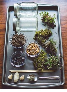 Terrarium ingredients: glass vessels, decorative stones, plants, moss, activated charcoal.
