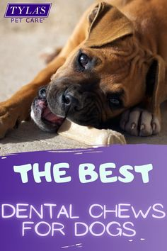 Are you looking to clean your dogs teeth but brushing isn't an option? Dental chews are an easy solution, now its just a matter of choosing the best one. #dentalchewsfordogs #bestdogdentalchewsfor2020 #bestdentalchews #dogdetalchews #dogs #dog Big Dogs, Large Dogs, Small Dogs, Dog Dental Care, Pet Care, Dachshund Dog, Dachshunds, Dog House Kit, Dog Food Delivery